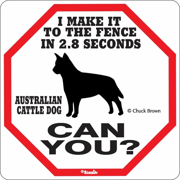 Insegna 2.8 seconds australian cattle dog