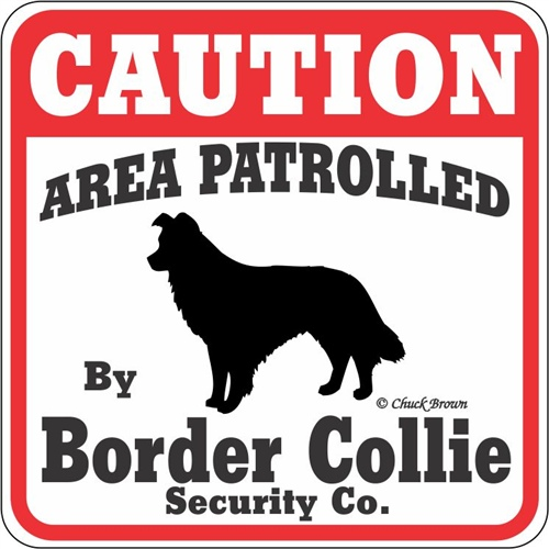 Insegna Caution border collie